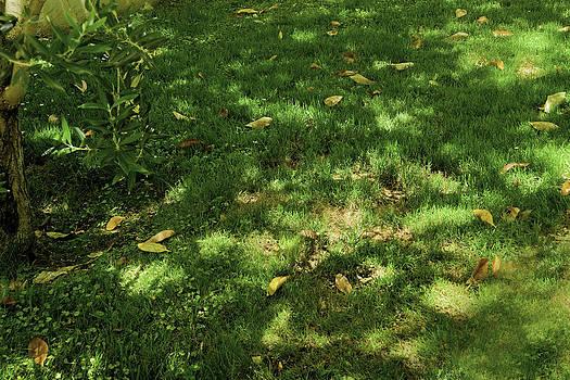 Dappled Grass by Lauren Steinhauer