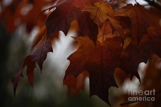 Linda Knorr Shafer - Dark Autumn