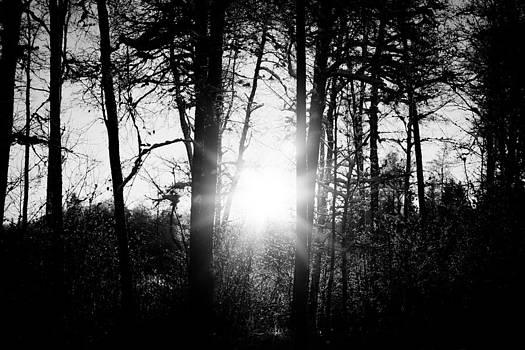 Dark Nature by Robert Hellstrom