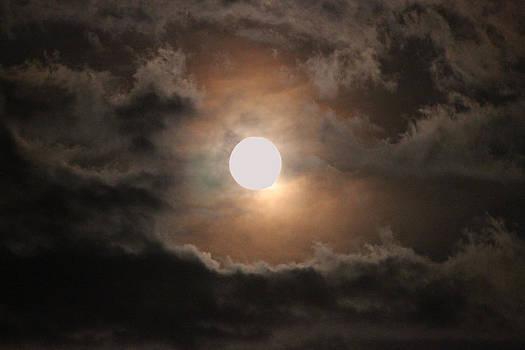 Dark Night by Brenda Donko