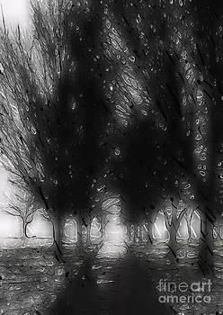 Dark path by Shane B