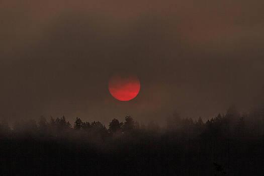 Dark Sunrise by Danielle Silveira