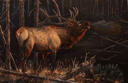 Dark Timber Bull by Scott Thompson