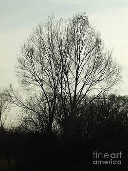 Dark tree by Stephan Kubancsik