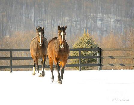 Dashing through the Snow by Carol Lynn Coronios