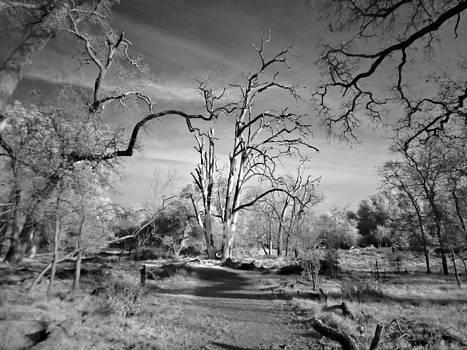 Dead of Winter by Stephen Batson