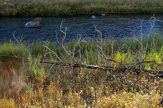 Dead Tree Branch near-byCrooked River by Thomas J Rhodes