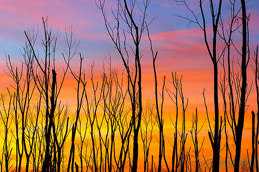 Dead Trees at Sunset by Jackie Novak