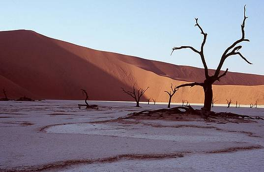 Dead Vlei by Stefan Carpenter