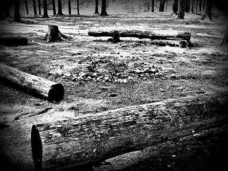 Dead Wood by Devin Stone