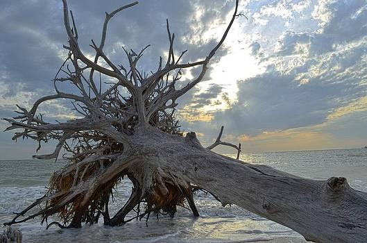 Deadwood by Bob Jackson