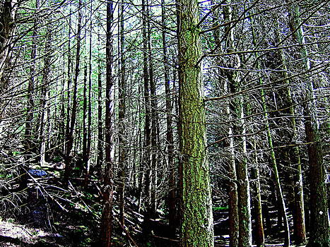 Deadwood in the Scottish forest  by Bill Lighterness