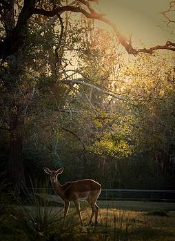 Dear deer by Caitlyn Stykowski