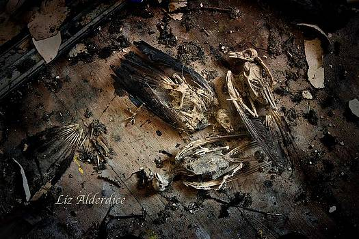 Liz  Alderdice - Deathly Hallows