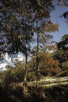 Judy Hall-Folde - December Afternoon on the Suwannee