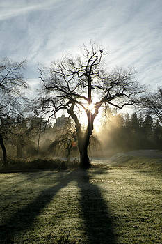 December Sun by Brian Chase