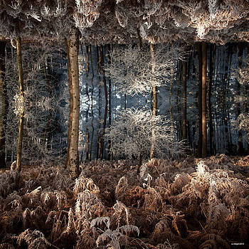 Deep forest  by Anders Hingel