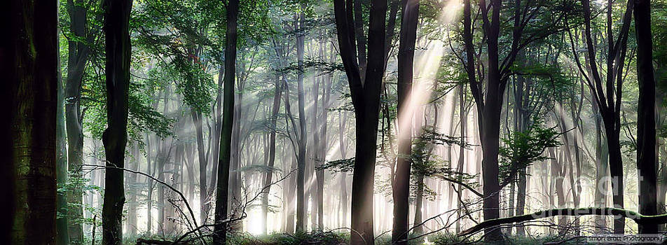 Simon Bratt Photography LRPS - Deep forest morning light