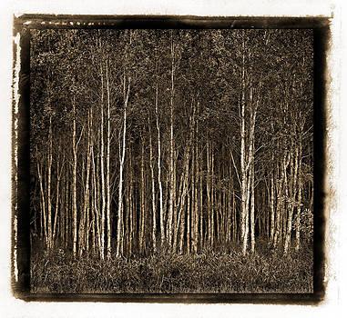 Russ Brown - Deep Forest