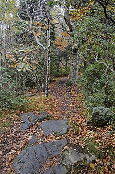 Deep in the Woods by Susan Leggett
