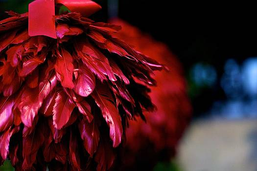 Deep Red Feathers by JM Photography