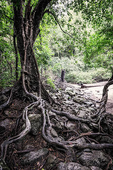 Deep Rooted by Nick  Shirghio