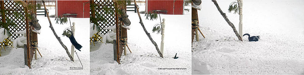 Randall Branham - Deep Snow Cats Can