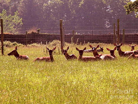 Joe Cashin - Deer farm