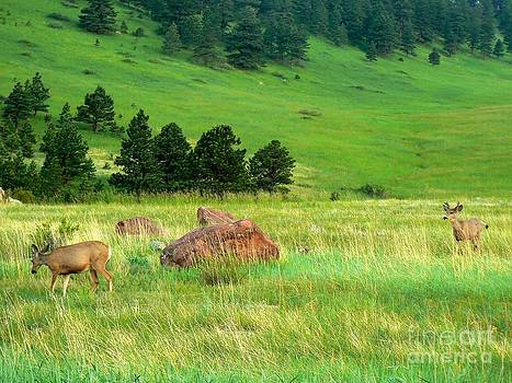 Deer in Boulder Foothills by Rincon Road Photography By Ben Petersen