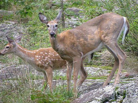 Alfred Ng - deer in wild