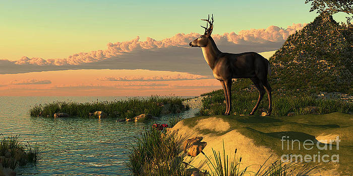 Corey Ford - Deer Lake