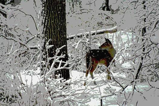 Deer on Snowy Trail by Sharon McLain