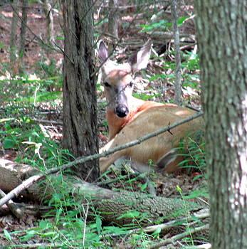 Deer on the Trail by Carolyn Mortensen