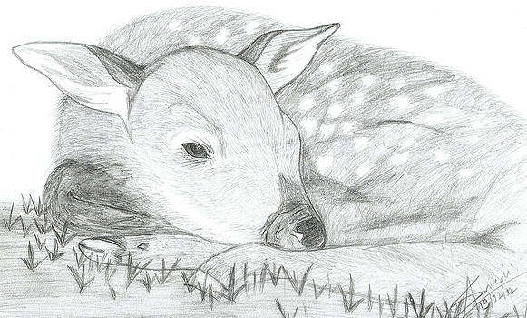 Deer Sketch by Abhinav Krishna Dwivedi