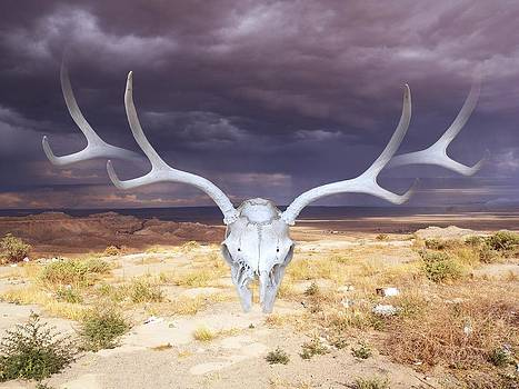 Deer Skull Third Mesa  by Paul Ferrara