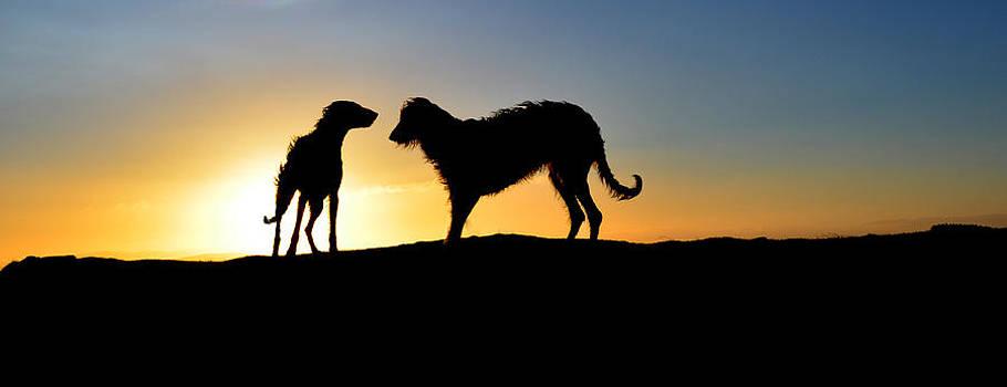 Deerhound Shillouette by Joak Kerr