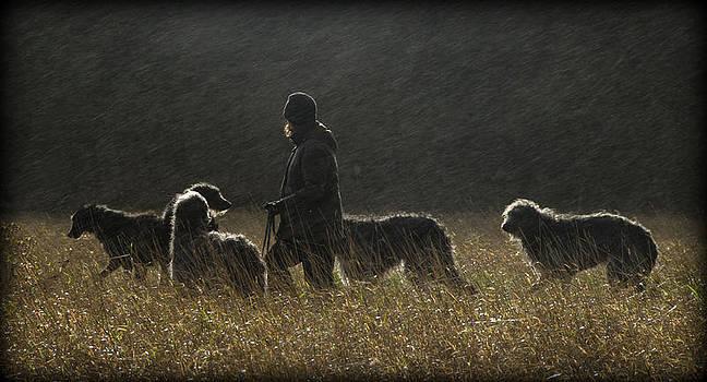 Deerhounds In The Rain by Joak Kerr