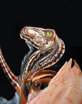 DeinoHatch by Michael McKenzie