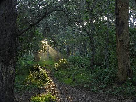 Del Monte Forest Pacific Grove CA by Elery Oxford