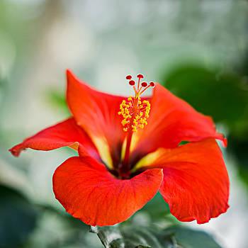 Delicate Beauty by Ken Stanback