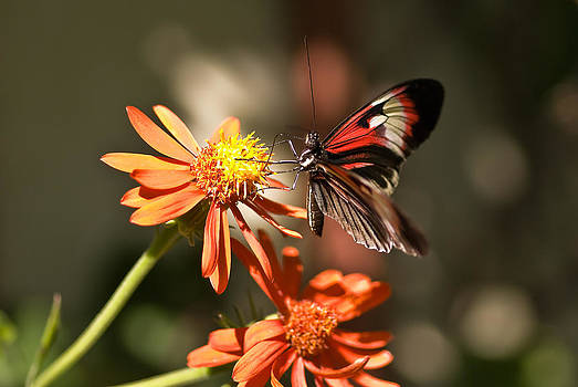 Delicate beauty by Michael Rucci