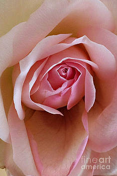 Delicate Petals by Roxanne Marshal