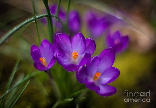Mike Reid - Delicate Spring Colors