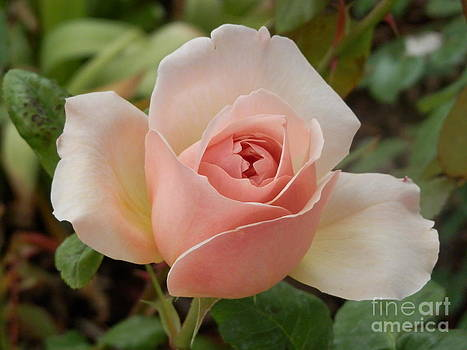 Delicately Pink by Margaret McDermott