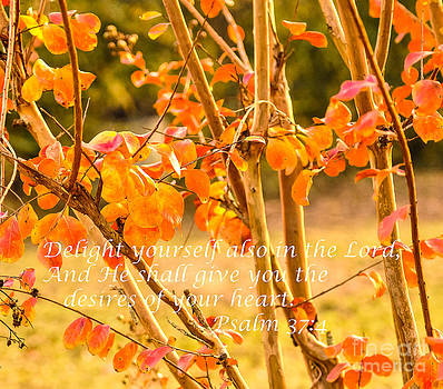 Delight Yourself in the Lord by Reflections by Brynne Photography