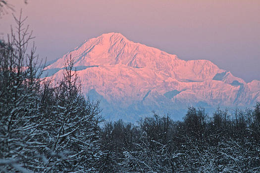 Denali December Sunrise by Donna Quante