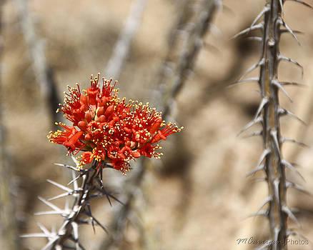 Desert Beauty 2 by Michael Carrigan