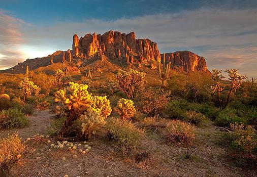 Desert Beauty by David  Forster