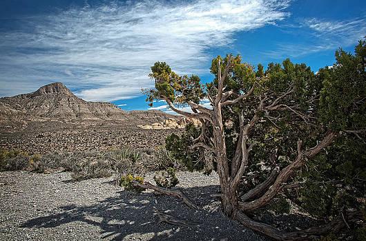 Desert Beauty by Jen Morrison