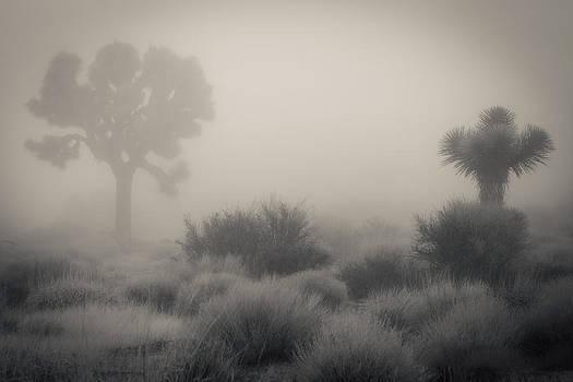 Desert Fog / no watermark by Diana Shay Diehl